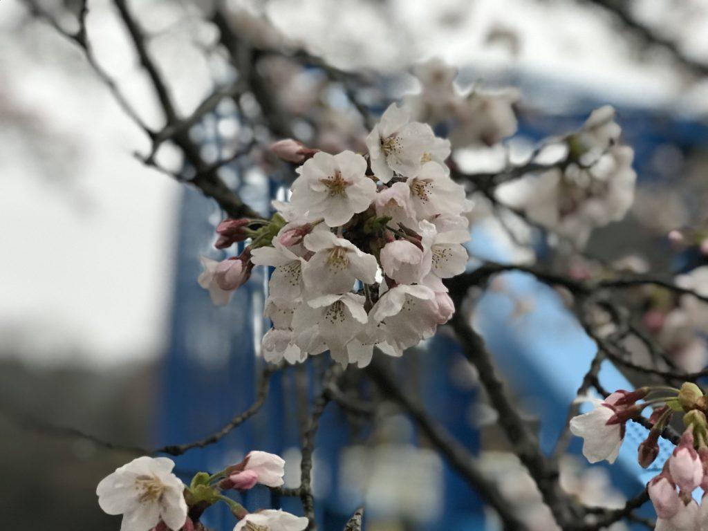 名張市-青蓮寺